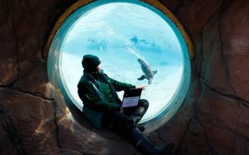 Οι πιγκουίνοι και η σκανδαλώδης ερωτική τους ζωή