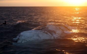 Να γιατί εναποθέτουν οι επιστήμονες κουφάρια φαλαινών στα βάθη των ωκεανών