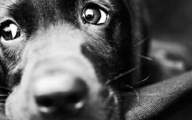 Στην τελική ευθεία το καταφύγιο αδέσποτων ζώων στο Μαρκόπουλο