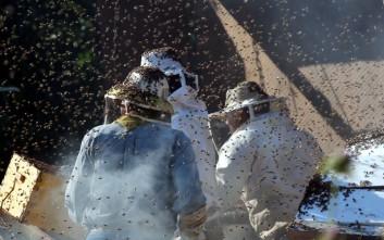 Γέμισε μέλισσες η επαρχιακή οδός Ναυπλίου-Μυκηνών