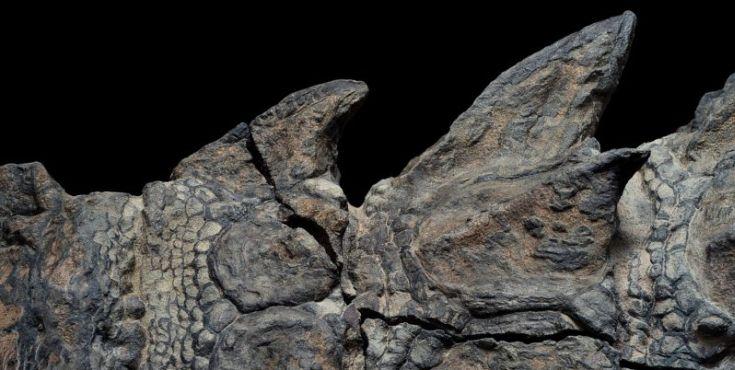 nodosaur2