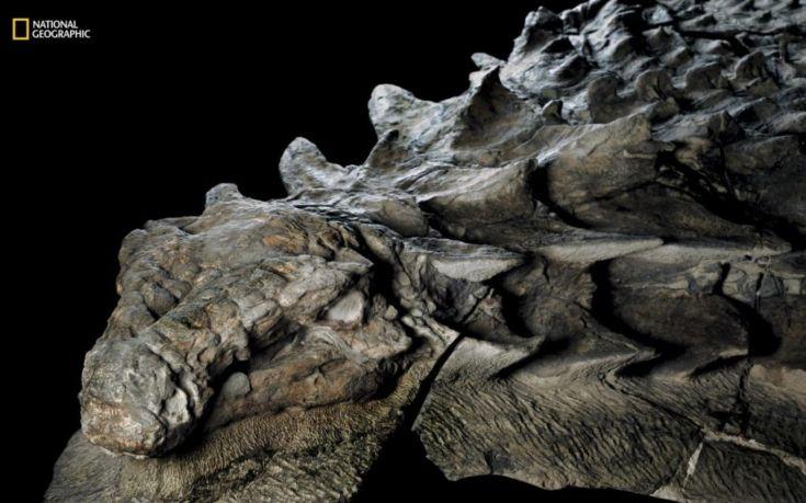 nodosaur4