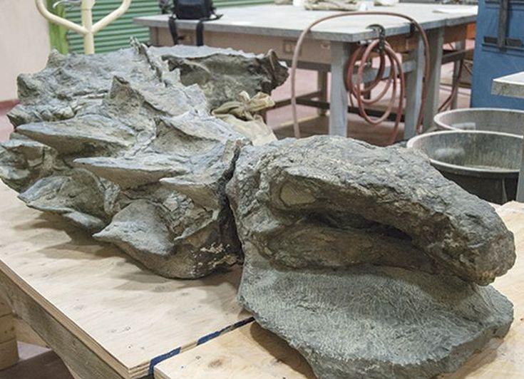 nodosaur7