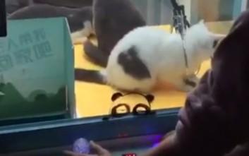 Έβαλαν ζωντανές γάτες σε «παιχνίδι» με λούτρινα