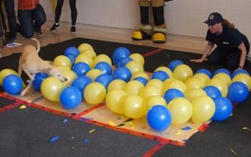 Σε πόσα δευτερόλεπτα μπορεί ένας σκύλος να σπάσει 100 μπαλόνια