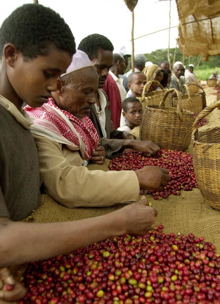 starbucks vs ethiopia