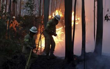 Οι φονικότερες δασικές πυρκαγιές στον κόσμο