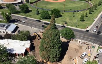 Έτσι μετακινείς ένα πελώριο δέντρο 360 τόνων