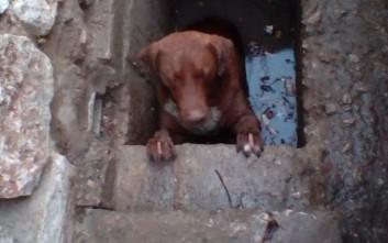 Σκύλος απεγκλωβίστηκε από φρεάτιο στη Λαμία