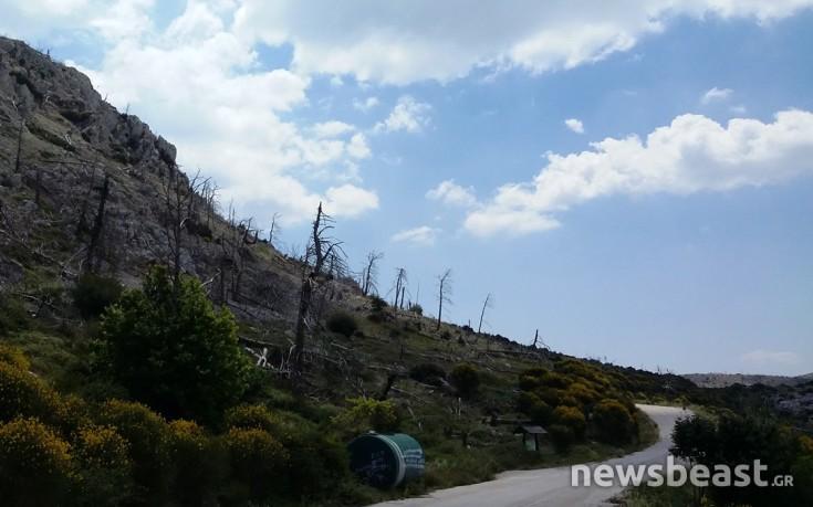 Τι απέγινε η Πάρνηθα 10 χρόνια μετά την καταστροφική πυρκαγιά
