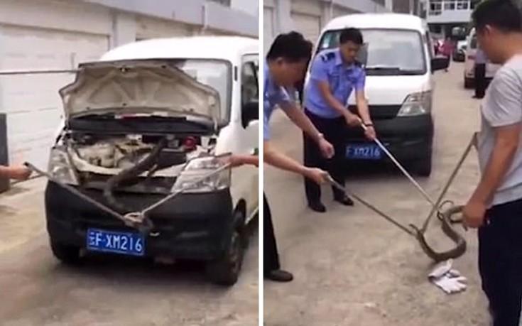 Οδηγός έντρομος ανακαλύπτει «βασιλική» κόμπρα μέσα στο αυτοκίνητό του