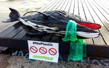 Ένα δελφίνι από... πλαστικά «ξέβρασε» η θάλασσα στη Θεσσαλονίκη