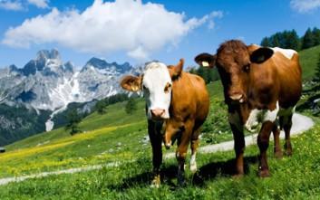 «Ασπίδα» σε αλλεργίες και ψυχικές διαταραχές η διαβίωση κοντά σε ζώα