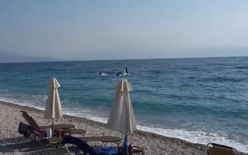 Παιχνίδια στα ρηχά για δελφίνια στην Ακράτα