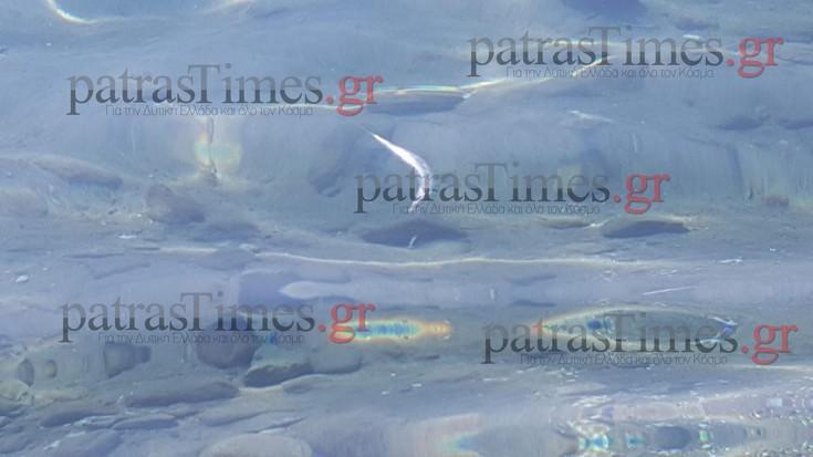 Μετά τις μέδουσες τα νεκρά ψάρια εμφανίστηκαν στις παραλίες