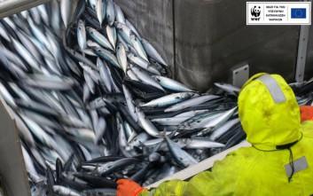 Το 66% των ψαρικών στην Ελλάδα είναι εισαγόμενα