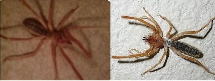 Ελλάδα αράχνες