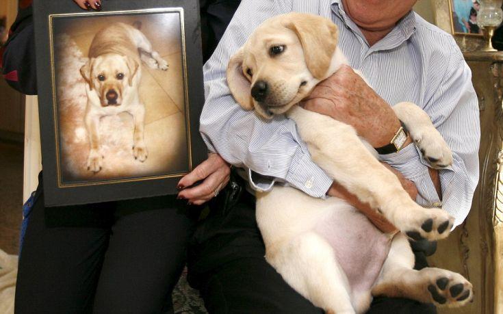 Κλωνοποίηση σκύλων κατά παραγγελία