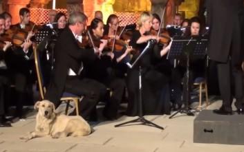 Ο μουσικόφιλος... αδέσποτος σκύλος που έγινε viral