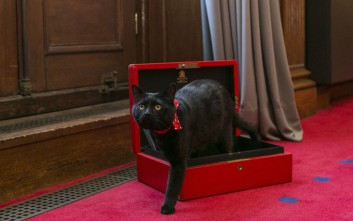 gladstone cat