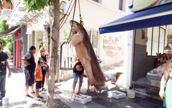«Κόπανος» 300 κιλών πιάστηκε στα δίχτυα ψαράδων στο Ιόνιο