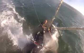 Έκανε kitesurf και σκόνταψε πάνω σε μια… φάλαινα