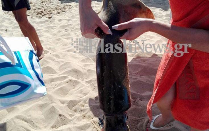 Θράψαλο - γίγας σε παραλία στα Χανιά