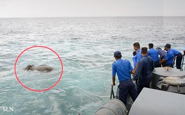 Μεγάλη επιχείρηση στον ωκεανό για τη διάσωση ελέφαντα που πνιγόταν