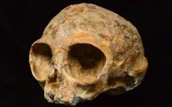 Βρέθηκε στην Αφρική κρανίο που ανήκε σε κοινό πρόγονο πιθήκων και ανθρώπων