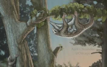 Ανακαλύφθηκαν τα αρχαιότερα ιπτάμενα θηλαστικά στον πλανήτη
