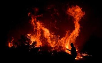Νεκρά πολλά άγρια ζώα από τις πυρκαγιές