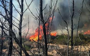 Σε εξέλιξη φωτιά στη Νέα Μάκρη