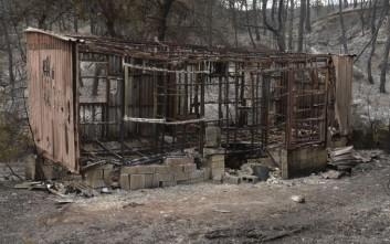 Σε εξέλιξη η καταγραφή ζημιών από την πυρκαγιά στον Ωρωπό