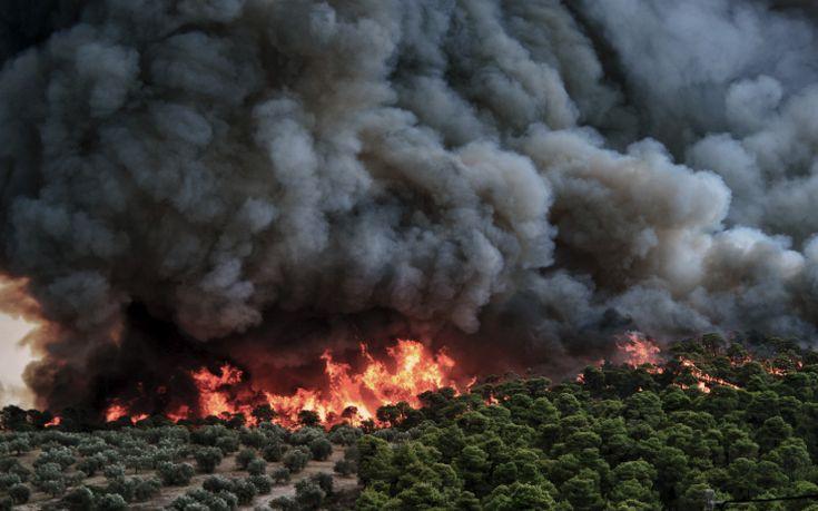 «Η πυροσβεστική κατάφερε και έσωσε το πανέμορφο δάσος της Στροφυλιάς»