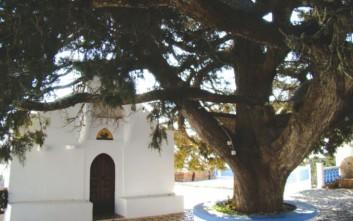 Έκλεψαν τα τάματα στο μοναστήρι του Αϊ Γιάννη στη Χάλκη