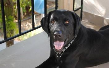 Ο αστυνομικός σκύλος Blanco βγήκε στη σύνταξη