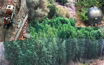 Χασισοφυτεία εντοπίστηκε σε χωράφι στο Ηράκλειο της Κρήτης