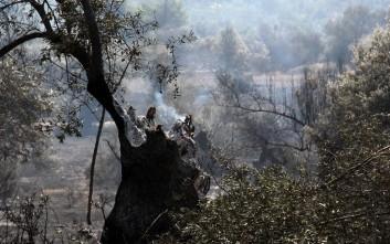 Η ανακοίνωση της Πυροσβεστικής για τη φωτιά στον Κάλαμο