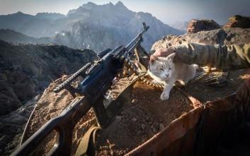 Οι γάτες των τουρκικών μονάδων στα βουνά των Κούρδων