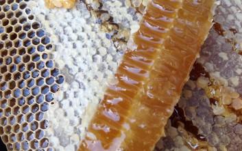 «Στάζει μέλι… Αρναίας» η Ευρώπη