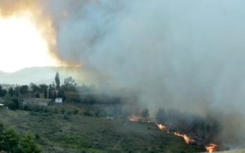Δύο πυρκαγιές σε εξέλιξη σε Φάρσαλα και Κιλελέρ