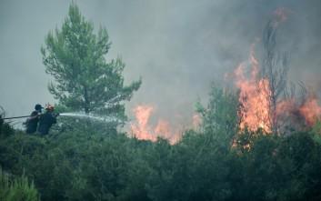 Πυρκαγιά στην περιοχή Γιαννισκάρι στην δυτική Αχαΐα