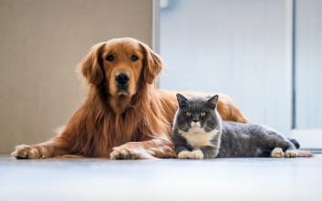 Ανατροπή στο νομοσχέδιο για τα κατοικίδια και τα αδέσποτα ζώα