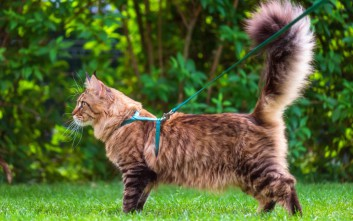 Το χωριό που θέλει να απαγορεύσει στους κατοίκους να έχουν γάτες