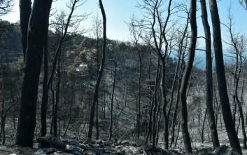 Η θλιβερή επόμενη μέρα της φωτιάς στην Αττική