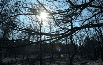 «Ένα δάσος μετά από πυρκαγιά είναι καμένο αλλά δεν είναι νεκρό»