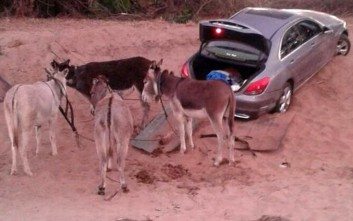 Στη Νότια Αφρική περνούν τα λαθραία αμάξια με… γαϊδουράκια