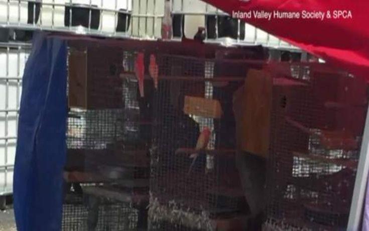 Διέσωσαν 2.000 ζώα που ζούσαν σε άθλιες συνθήκες σε βιομηχανική αποθήκη