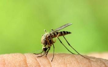 Ο Ιατρικός Σύλλογος ανησυχεί για τα νέα κρούσματα του ιού του Δυτικού Νείλου