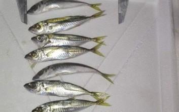 Κατασχέθηκαν 608 κιλά ψαριών στη Νέα Μηχανιώνα